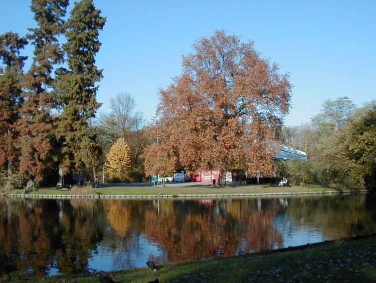 autumn-2-1467201
